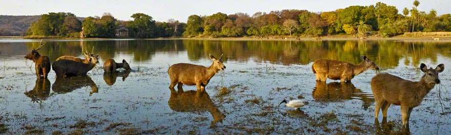 Image result for ranthambore forest newlyplace.com